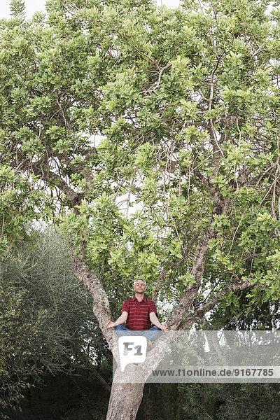 Man meditating in tree