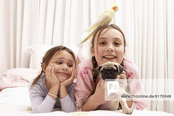 Bett Hund mischen Vogel Mädchen Mixed
