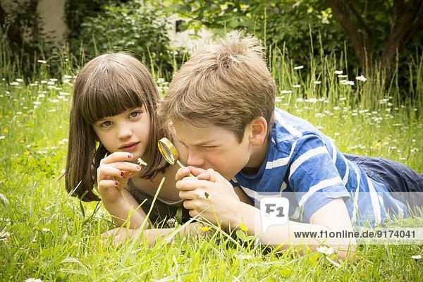 Porträt von Geschwistern  die auf einer Wiese im Garten liegen und Spaß mit der Lupe haben. Porträt von Geschwistern, die auf einer Wiese im Garten liegen und Spaß mit der Lupe haben.