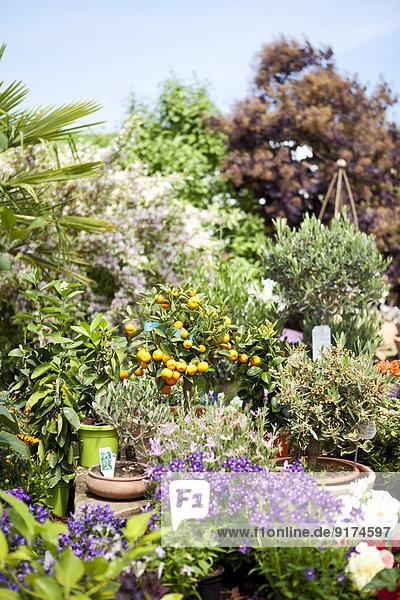 Angebot im Gartencenter