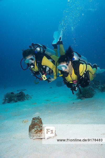 Palau  Pazifischer Ozean  zwei Taucher mit Blick auf die Seegurke Thelenota anax