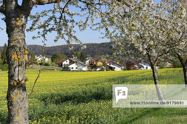 Deutschland  Bayern  Oberbayern  Altmühltal  Walting  Gungolding