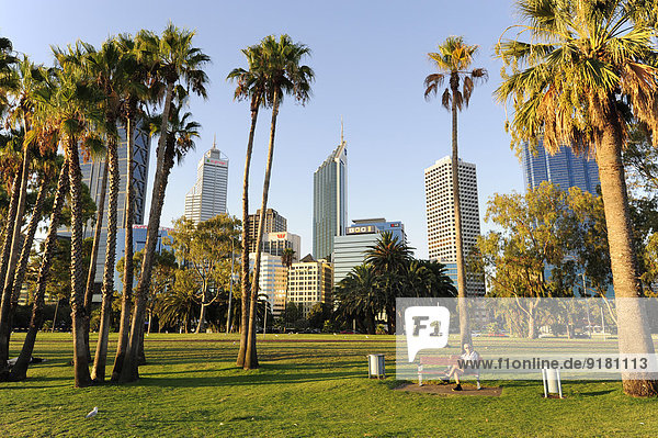 Australia,  Perth,  central business district,  Esplanade,  palm trees in front of skyline