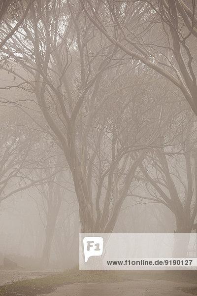 Nackte Bäume im Nebel im Park
