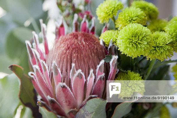 Nahaufnahme von frischen Blumen