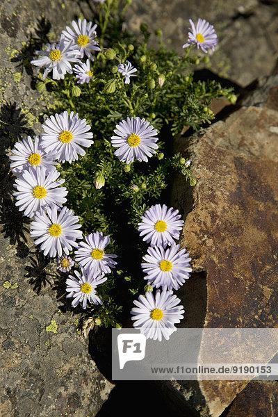 Hochwinkelansicht der im Fels wachsenden Blumen