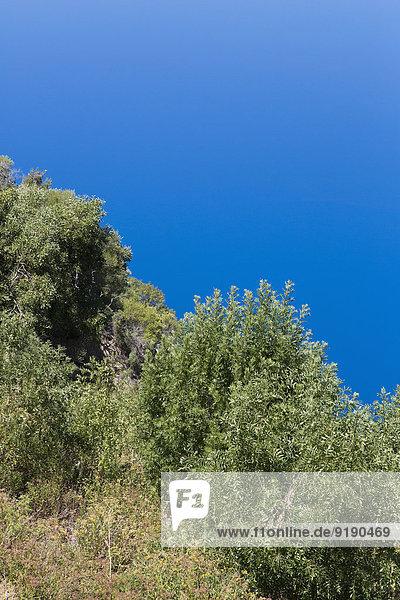 Bäume gegen klaren blauen Himmel
