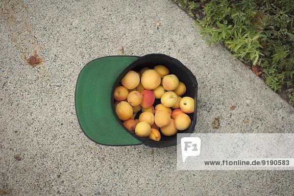 Direkt über dem Schuss frischer Pfirsiche in der Mütze im Freien