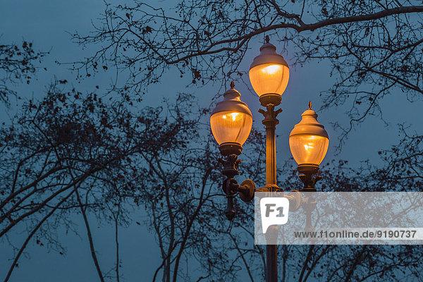 Niederwinkelansicht der beleuchteten Straßenleuchte gegen den Baum in der Abenddämmerung