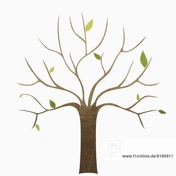 Ein kahler Baum vor weißem Hintergrund