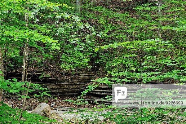 Summer woodland along the Lost Valley Trail near Clark Creek  Buffalo National River (Ponca Unit)  Arkansas  USA.
