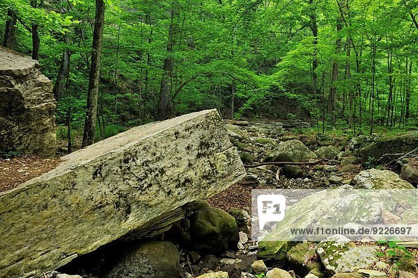 Sandstone cliffs and fallen rock in the woodland along the Lost Valley Trail near Clark Creek  Buffalo National River (Ponca Unit)  Arkansas  USA.