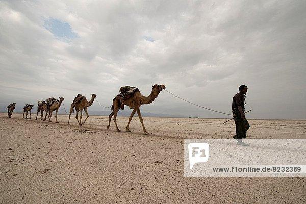 tragen Depression Wüste Wohnmobil Kamel Äthiopien Speisesalz Salz