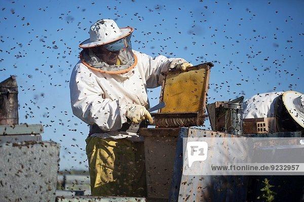fliegen fliegt fliegend Flug Flüge Landschaft arbeiten Biene Geräusch Andalusien Imker Honig Spanien Schwarm