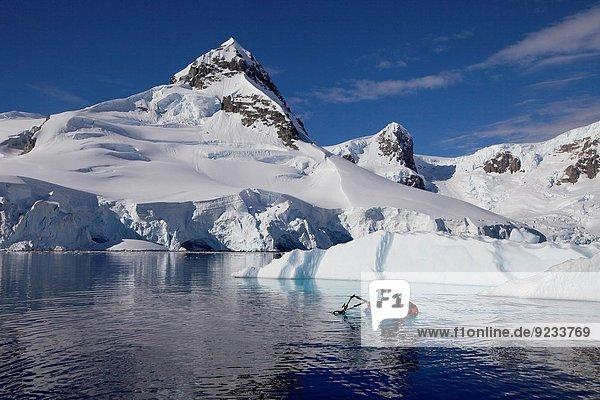 Unterwasseraufnahme Fotograf Antarktis