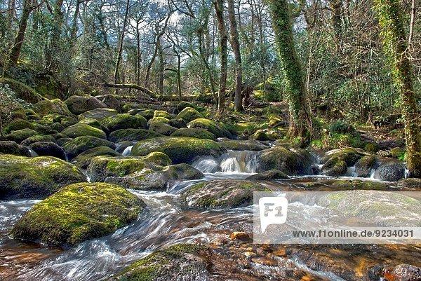 Becky Falls Woodland Park And Nature Trail  Also Known As Becka Falls  Manaton  Newton Abbott  Devon. Uk.
