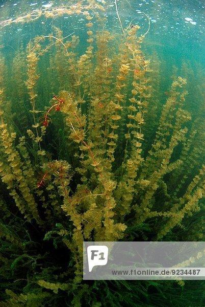 Wasser Frankreich Frische See Pflanze