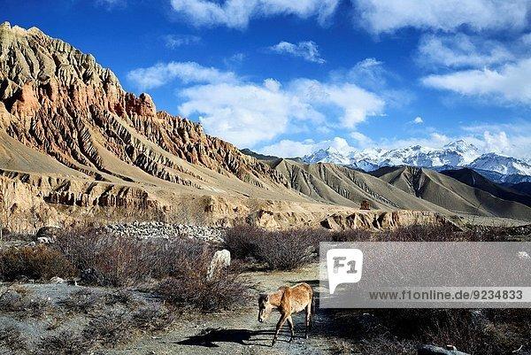 nahe Felsbrocken Tal Anordnung Dorf rot Grenze Mustang Nepal ocker Tibet