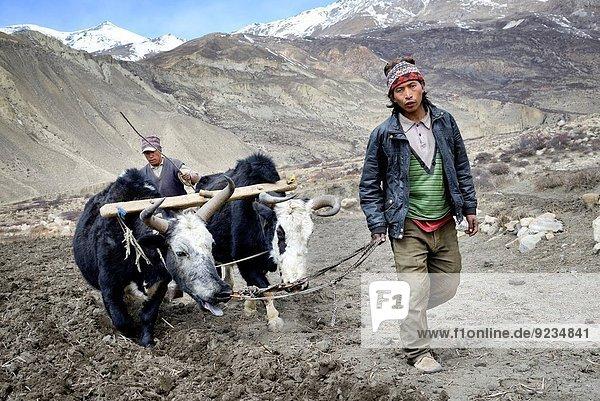 nahe Feld Landwirtin Grenze Mustang Nepal pflügen Tibet