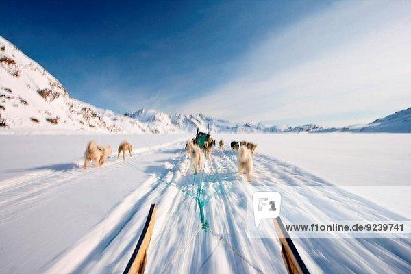 Hund Kulusuk Grönland Schlitten