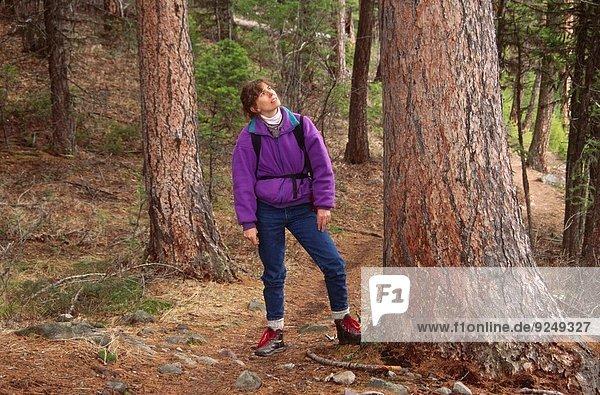 folgen See Kiefer Pinus sylvestris Kiefern Föhren Pinie Niederlande