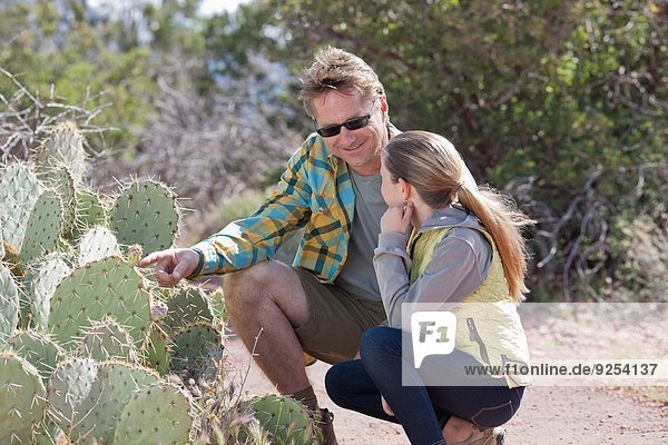Father and daughter looking at cacti whilst out hiking  Sedona  Arizona  USA