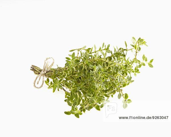 Bund Zitronenthymian  Thymus citriodorus