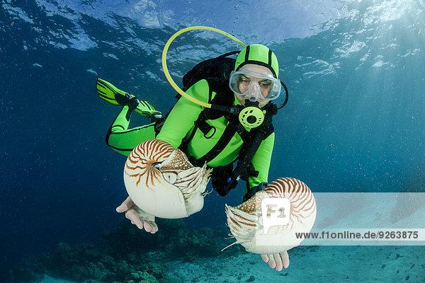 Ozeanien  Palau  Taucher beobachten Palau nautilusses  Nautilus belauensis  im Pazifik