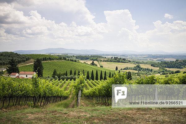 Italien  Toskana  Chianti  Toskanische Landschaft mit Weinreben