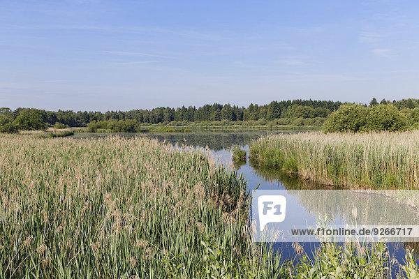 Deutschland  Bayern  Freimoos  Zillhamsee