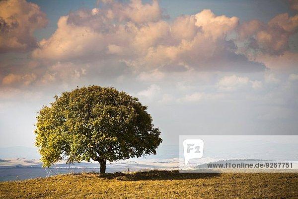 Blick auf Baum und Landschaft  Volterra  Toskana  Italien