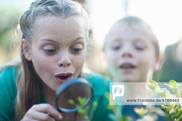 Bruder und Schwester beim Betrachten von Pflanzen mit Lupe im Garten
