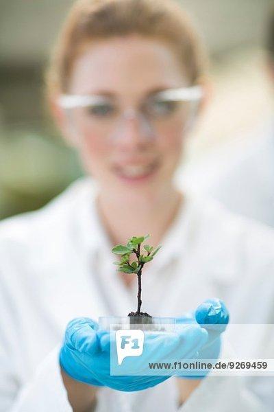 Porträt einer Wissenschaftlerin  die eine Pflanzenprobe im Polytunnel hochhält.