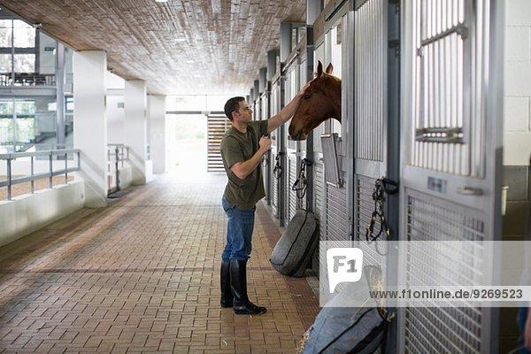 Stallhand-Streichelpferd im Stall