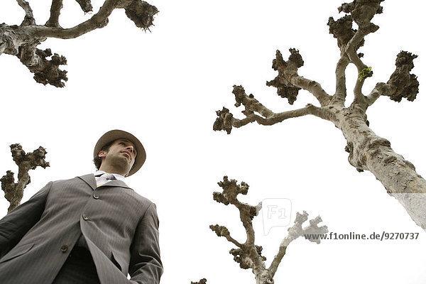 stehend nebeneinander neben Seite an Seite Geschäftsmann Baum Ansicht
