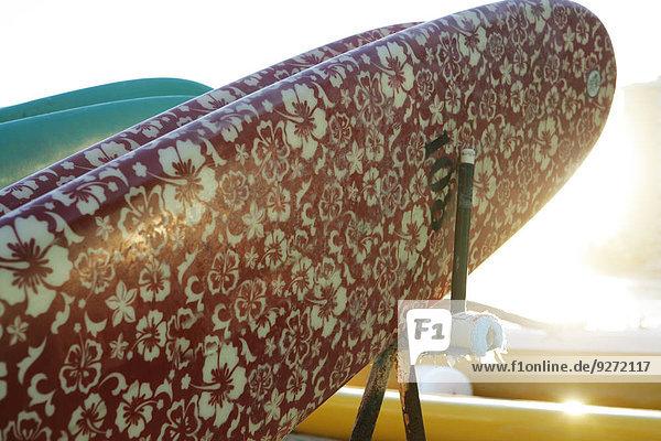 Blume Surfboard Design Ansicht