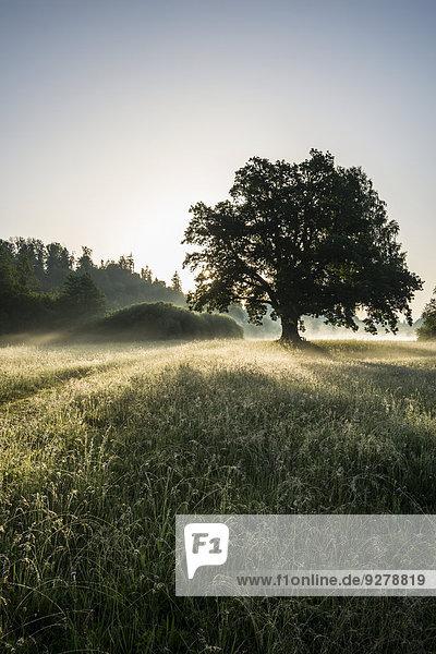 Morgenstimmung  Mozarteiche  Seeon  Chiemgau  Oberbayern  Bayern  Deutschland Morgenstimmung, Mozarteiche, Seeon, Chiemgau, Oberbayern, Bayern, Deutschland