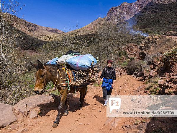 Frau mit Packpferd mit schwerer Last auf einem Bergpfad im Atlas-Gebirge  Lehmdorf Anammer  Ourika-Tal  Marrakech-Tensift-Al Haouz  Marokko