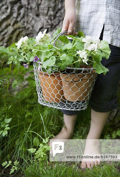 halten Pflanze Topfpflanze