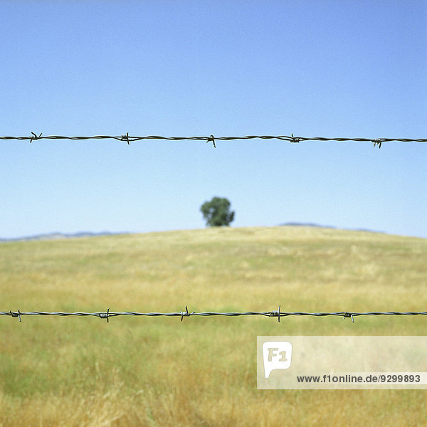 Stacheldrahtzaun vor einem Feld unter blauem Himmel und Sonnenschein