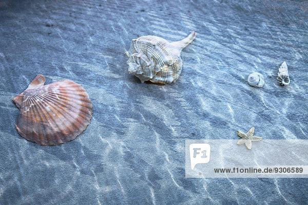 Shells in pool