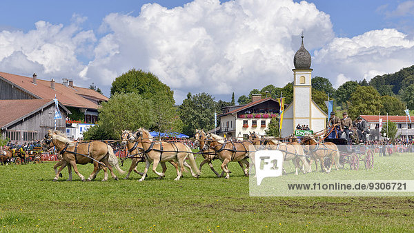 Ten-horse carriage with Haflinger horses from Wildbad Kreuth  in front of Leonhardi Chapel  first international ten-horse carriage meeting  Hundham  Leitzachtal Valley  Upper Bavaria  Bavaria  Germany