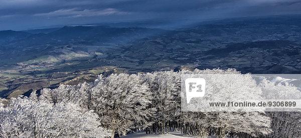 Bäume mit Raureif  Monte Catria  Apennin  Region Marken  Italien