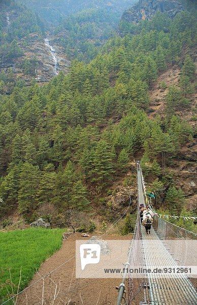 Hausrind Hausrinder Kuh Yak Bos mutus gehen Brücke Himalaya Mount Everest Sagarmatha hängen Nepal