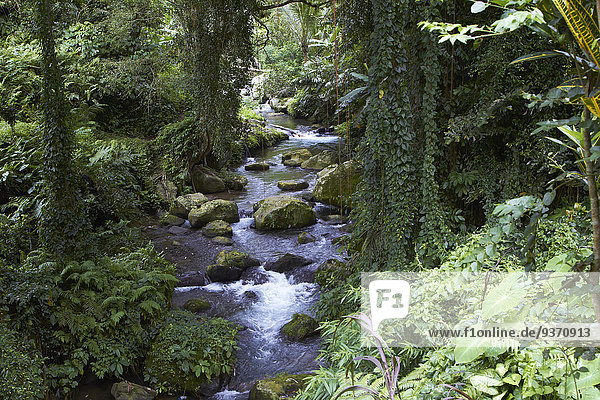 River flowing through lush forest