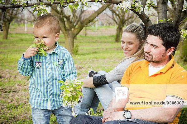 Blume Junge - Person Menschliche Eltern aufheben