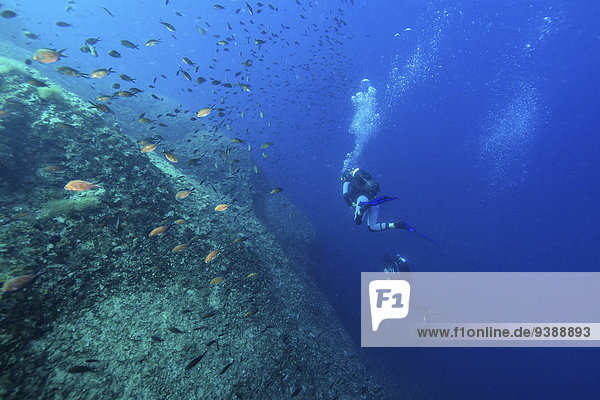 Divers exploring school of fish  Dalmatia  Croatia