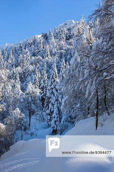 Alpe di Neggia  Switzerland  Europe  Ticino  Gambarogno  winter  fresh snow  snow  winter wood