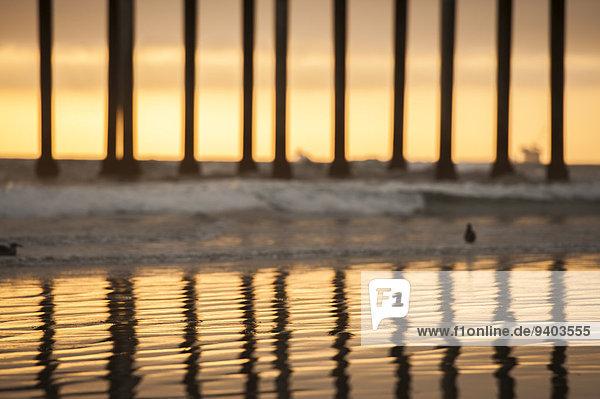 Vereinigte Staaten von Amerika USA Reihe Außenaufnahme Landschaftlich schön landschaftlich reizvoll Wasser Ruhe Strand Sonnenuntergang Silhouette Ozean Küste niemand Spiegelung 1 Querformat Kai Vogel Sonnenlicht Landschaft Kalifornien Huntington Beach Idylle Einzelnes Tier freie Natur Wildtier