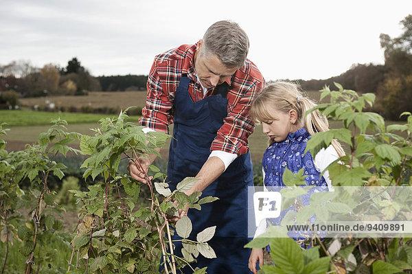 erklären Pflanze Feld Bauer Tochter